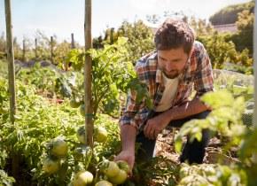 Una alternativa de sistemas agrícolas y alimenticios más sostenibles